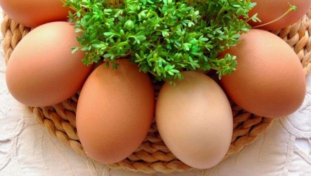 jajka i rzeżucha