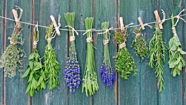 wszystko o ziołach artykuł